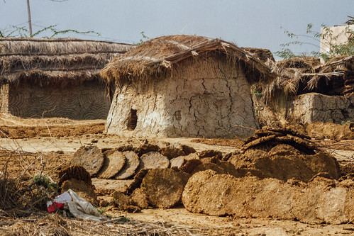 Cow Dung Storage, Uttar Pradesh India
