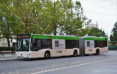 Wien, Boschstraße 16.08.2017 (The STB) Tags: bus busse autobus autobús wien vienna viena publictransport citytransport öpnv