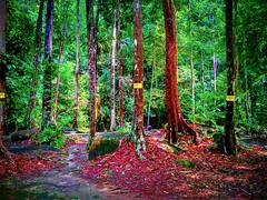Ulu Bendul-Angsi trailhead 2.727418N ,102.0758E, Tanjung Ipoh, Negeri Sembilan https://goo.gl/maps/h5ZoerVZiT72 #大自然 #nature #自然 #طبيعة #자연 #Alam #природа #ธรรมชาติ #travel #holiday #traveling #trip #Asian #旅行 #度假 #亞洲 #馬來西亞 #วันหยุด #การเดินทาง #ホリデー #휴일 (soonlung81) Tags: trip طبيعة natural 自然 วันหยุด vacanza malaysia путешествие resa vakantie 휴일 natuurlijk 馬來西亞 alam 旅行 reise 馬來西亞旅行 nature природа semester ulubendul naturel naturale ธรรมชาติ asia natürlich 여행 asian voyage 大自然 reizen 度假 traveling urlaub 자연 ホリデー س การเดินทาง holiday праздник natuur عطلة vacances fiesta viaggio 亞洲 viaje travel