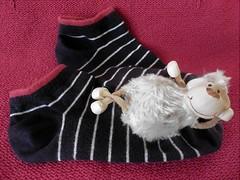 Relaxing (Hannelore_B) Tags: schaf sheep socken socks macrofriday lookingcloseonfriday