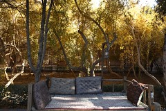 20171125_182 Dolat Abad Garden