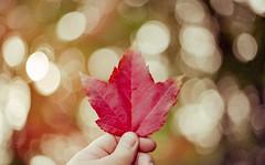 All the things we leave behind (Yutaka Seki) Tags: leaf fall autumn foliage bokeh red canona1 canonfd50mmf14 fujicolorsuperiaxtra800 expiredfilm analogue homedeveloped unicolorpresskit argentixcac41powderkit