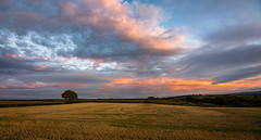 no oil painting (Phil-Gregory) Tags: scenicsnotjustlandscapes sky sunrise sunset countryside clouds cloudscape classic tree colour light nikon d7200 tokina tokina1120mmatx 1120mm 1120mmf28 1120mmproatx11 1120mmproatx 1116mmf8 wideangle ultrawide landscapes derbyshire uk england apperknowle