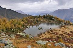 Autumn colours (evakatharina12) Tags: switzerland wallis valais binn binntal mässersee stockhorn breithorn eggerhorn aletsch gletscher alps mountains lake larch autumn fall