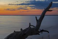 Dragon at the sea (Matt md. H.) Tags: landschaft nature sonnenuntergang sweden wasser landscape sunset water sea schwedenurlaub2018 schweden se