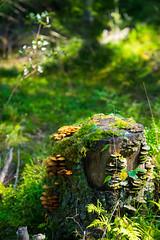 Oslo Wald (Oli_21) Tags: wald pilze oslo norwegen gummistiefel urlaub natur bokeh