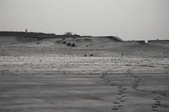 Les oiseaux (Atreides59) Tags: nord france beach plage sable sand oiseau bird oiseaux birds ciel sky animaux animals pentax k30 k 30 pentaxart atreides atreides59 cedriclafrance noir blanc nb noiretblanc black white bw blackandwhite