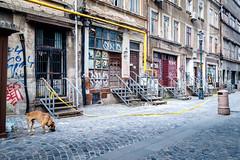 (fernando_gm) Tags: rumania building bucharest bucarest bucureşti city ciudad street calle callejera perro dog graffiti architecture arquitectura fujifilm fuji 1024mm xt1 colour color romania
