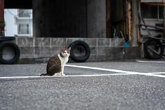 猫 (fumi*23) Tags: ilce7rm3 sony street sel85f18 animal a7r3 neko katze gato cat chat feline 85mm fe85mmf18 ねこ 猫 ソニー