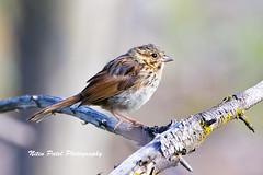 IMG_0087 (nitinpatel2) Tags: bird nature nitinpatel