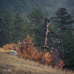 Autumn Flames (Matt Farris) Tags: rocky mountain national park autumn fall foliage orange flames