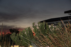 DSC04457.jpg (taarhaug) Tags: gardenroute pinnaclepoint mosselbay westerncape southafrica za