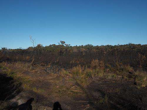 Hot Burn of Teatree-Paperbark Flats 2018 – Red Moon Sanctuary, Redmond, Western Australia
