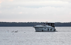 swans (fotografia.KarolinaKwiatkowska) Tags: swan swans mazury masuria masuren polska poland polen yacht yachts łabędz ptak ptaki bird birds
