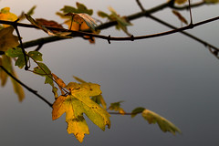 Last leaves in the fall (radonracer) Tags: