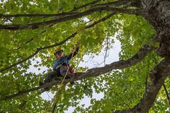 Women's Tree Climbing Workshop (Women's Tree Climbing Workshop) Tags: tlbtb creative tlbtbcreative tracy buchholz tree climbing womens climbers arborists wtcw wtcw2018