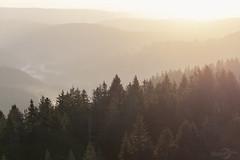 Sunrise | Feldberg | Schwarzwald | Black Forest | Germany (*Photofreaks*) Tags: adengs wwwphotofreakseu sunrise blackforest germany schwarzwald deutschland sonnenaufgang feldberg mountain badenwürttemberg dawn morgendämmerung landscape landschaft nature natur