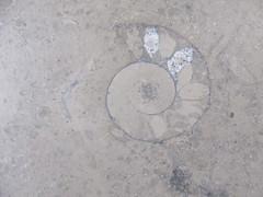 Friday, 21st, Ammonite IMG_6421 (tomylees) Tags: ammonite westfield stratford london september 21st friday 2018 project 365