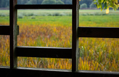 From Within the Blind (fotostevia) Tags: ridgefieldnationalwildliferefuge riversunit viewingblind autumn pentaxart