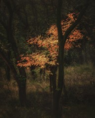 Show Your Colors (Wayne Greer) Tags: trees nature landscape woodland foliage kansas waynegreer autumn fall