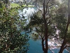 The mighty Waikato, (Home Land & Sea) Tags: nz newzealand waikatoriver taupo throughthetrees sooc sonycybershot dschx100v pointshoot homelandsea