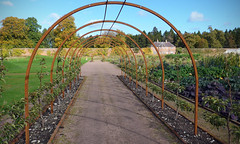 Trained (Andrew Gustar) Tags: gordon castle walled garden fochabers archway