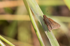 20181007-_E1A8414 (Denver Kramer) Tags: animals canon100400mmll canon7dll clearcreek denton denverkramerphotography texas skippers wildlife unitedstates us