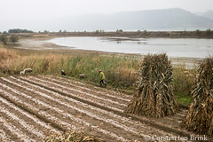 Agriculture near Linxia (10b travelling / Carsten ten Brink) Tags: 10btravelling 2017 asia asian asien bingling carstentenbrink china chine chinese gansu gansuprovince iptcbasic linxia linxiahui prc peoplesrepublicofchina silkroad agriculture farming hay haystack province tenbrink 中华人民共和国 中国 甘肃