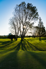 Tree (tokyobogue) Tags: japan kawaguchi arakawa river riverbank nikon nikond7100 d7100 sigma sigma1750mmexdcoshsm shadows sunbeams sunset grass