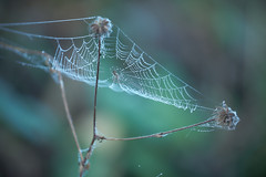 rain catcher ([ TINO ]) Tags: outdoor spider web flower forest sunlight autumn nature noperson green animal bokeh light