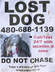 "Lost Dog (Midnight Believer) Tags: ""saltriver"" lostdog flier missing americansouthwest maricopacounty arizona dog pet sadness"