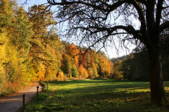Out on a Drive (Sue Elderberry) Tags: foliage fall autumn herbst herbstfärbung trees light sunlight grass nature