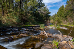 Following the mountain river (Merrillie) Tags: landscape ladieswell nature australia stream hunterrivercatchment newsouthwales rocks upperallyn nsw creek nationalpark river allynriver hunterregion green outdoors waterscape allynbrook stones barringtontopsnationalpark water