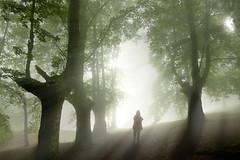 FOG CONTRALUZ (juan luis olaeta) Tags: bosque basoa forest fog foggy laiñoa nieblas paisajes landscape contraluz argia luz lightroom photoshop canon