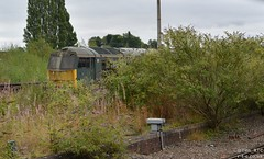 60081 lurks in the Toton undergrowth (Tim R-T-C) Tags: 60081 brgreen class60 dbcargo toton railroad railway speciallivery stored train