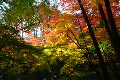Autumn colours (drafiei1) Tags: japan kyoto fall autumn autumncolours autumncolors fallcolors leaves leaf trees colors colours colorful nature naturephotography nikon daigoji