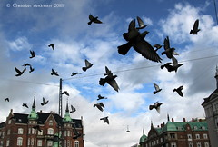 ... September ... (ChristianofDenmark) Tags: christianofdenmark copenhagen denmark autumn pigeons