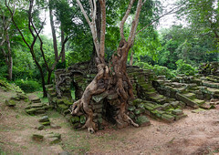 Temple overgrown with tree roots, Siem Reap Province, Angkor, Cambodia (Eric Lafforgue) Tags: abandoned ancientcivilisation angkor angkorwat apsara archaeology architecture artscultureandentertainment asia beautyinnature buddhism buddhist builtstructure cambodia colourimage environment famousplace history horizontal indochina khmer lush majestic monument nopeople oldruin outdoors rediscovered religion root ruin southeastasia spirituality temple templebuilding tetramelesnudiflora traditionallycambodian tranquility travel traveldestinations tree unescoworldheritagesite wat yasodharapura camboimg9913 siemreapprovince