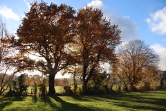 Oak trees line the way (Bluecloud9) Tags: aachen autumnfall forest nature
