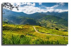 Ngaithau valley (Yellow Autumn) Tags: