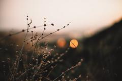 Solitude. (Jonathan Villanueva) Tags: sony a7 ii mitakon 50mm f095 095 hike hiking nature bokeh