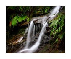 Leura (Mike Hankey.) Tags: cascades published goldenstaircase landscape leura federalpass bluemountains
