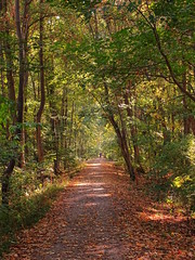 The Golden Trail (The-Beauty-Of-Nature) Tags: autumn fall herbst cozy mine october nature photography original light licht sunny sonnig forest woods wald trees bäume kühkopf naturalresort