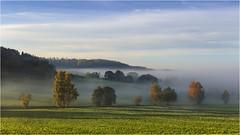 Morgenstund (Robbi Metz) Tags: deutschland germany bayern bavaria reischenau augsburgwestlichewälder landscape autumn trees forest sky fog colors canoneos