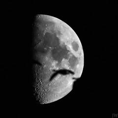 Kranichflug vor dem Mond (Joey Wolf) Tags: bird firmament himmel mond moon nacht night satellit system tier trabant vogel animal crane flügel half kranich natur satallite dars zingst ostsee