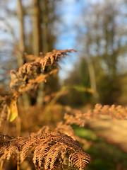 Forest colours (davehawker99) Tags: forest fern walk colour