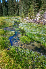 Spearfish Creek (Lead, South Dakota) (@CarShowShooter) Tags: geo:lat=4425413015 geo:lon=10392248353 geotagged hanna lead southdakota unitedstates usa 18200 18200mm blackhills blackhillsnationalforest buzsim canamhighway countryroad179 creek dew digitalart flowers lawrencecounty leadsouthdakota micropolitanstatisticalarea nature pasture photopainting river sonya6500 sonyalpha6500 sonye18200mmf3563oss sonyα6500 southdakotatouristattraction southdakotatravel southdakotavacation southlawrenceunorganizedterritory spearfishcreek spring topaz touristattraction travel travelphotography vacation vacationphotos water