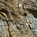 Highly convoluted gneiss (Archean; Norris South roadcut, Madison County, Montana, USA) 3