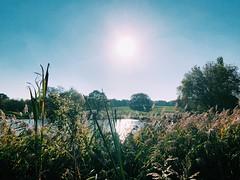 (zsuzsannatorok) Tags: hampstead heath pond