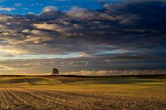 Nostalgia No. 1, autumn (Marcin eM.) Tags: sonyalpha7 sonya7 ilce7 pentacon50mmf18 jesień autumn beautiful landscape pejzaż podlasie polska tree drzewo clouds chmury